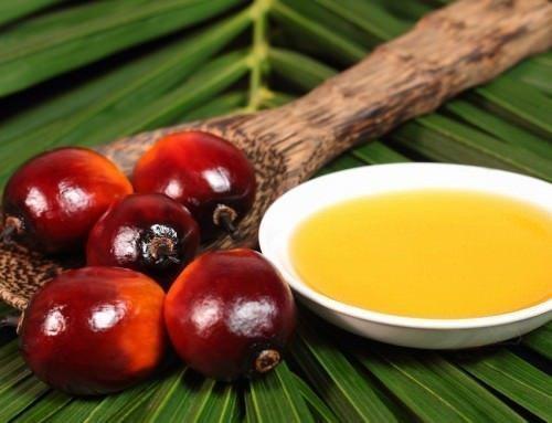 Çelişkilerin Yağı: Palm Yağı